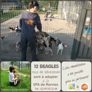 beagles-graal-spa_septembre-2016