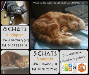 collage-chats-octobre