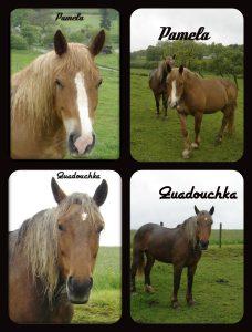 quadouchka-pamela